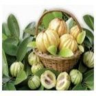 Garcinia Cambogia is the latest weight loss discovery. The supplement is extracted from the rind of the Garcinia Cambogia fruit (a small pumpkin shap… Reduce Weight, How To Lose Weight Fast, Lose Fat, Weight Gain, Loose Weight, Losing Weight, Pure Garcinia Cambogia, Tomato Pie, Weight Loss Supplements