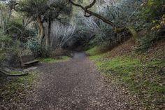 The Lonely Path (Alum Rock Park, San Jose, California) by Jim Watkins on 500px