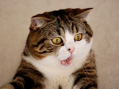 """!!!!!! Realllly? #CATS ♥✮✮""""Feel free to share on Pinterest"""" ♥ღ www.UNOCOLLECTIBLES.COM"""