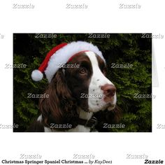 Shop Christmas Springer Spaniel Christmas Card created by Personalize it with photos & text or purchase as is! Custom Christmas Cards, Christmas Greeting Cards, Holiday Cards, Holiday Essentials, Springer Spaniel, Prints, Christian Christmas Cards, Personalized Christmas Cards