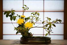Как сделать красивую композицию цветов? - Икебана своими руками. Создаем красивую композицию.. Фото №1