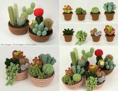 cactussen zonder stekels