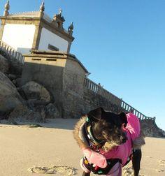 Porto BMW Motorad Pedro & Augusto have been showing us the local sites Church on the beach dating back to the 1600's to keep the fishermen safe on the rocky coastline   #PillionPooch #MadeToTravel #Cute #Dog #AdventureRider #DogsOnAdventures #AdventureDog #MotorcycleAdventure #PetTravel #BikerDog #PuppyLove #DogsOnBikes #BMW #DogAdoption #AdoptDontShop #MotoDog #Multi