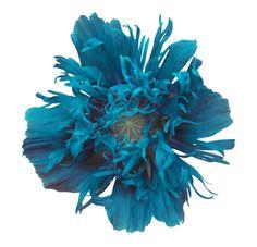 Blue poppy tattoo idea