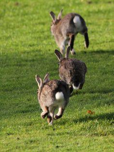 Three buns a'hoppin'