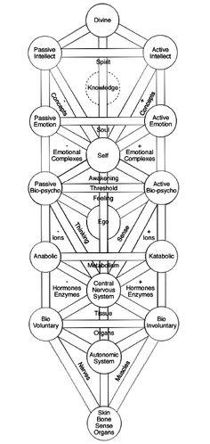 Diagram 5 - Human Body