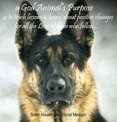 Inspirational Quote for the Day channeld by Brent Atwater about a Dog's Purpose movie, PETA, Hercules, American Humane and BAU A Dogs Purpose Quotes, A Dogs Purpose Movie, Loss Of Dog, Pet Loss, Cat Loss Quotes, German Shepherd Dogs, German Shepherds, Motivational Quotes, Inspirational Quotes
