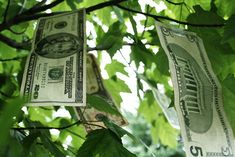 Part You Don't Need Money to Buy a Farm - The Permaculture Research Institute How To Raise Money, Way To Make Money, Money Fast, Live Below The Line, Eat Pray Love, Money Spells, Show Me The Money, Money Trees, Need Money