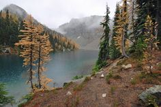 Golden #larches around Blue Lake in October.