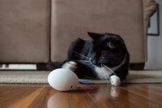 Gatos: 7 gadgets para 7 vidas  -  High-Tech Girl        Gatos. Shru, o companheiro inteligente