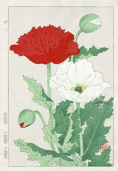 Shodo Kawarazaki Spring Flowers Poppies Woodblock Print beautifully detailed print with the seal of the artist in pristine condition Botanical Flowers, Botanical Prints, Art Floral, Japan Flower, Japanese Flowers, Botanical Drawings, Japanese Painting, Japanese Prints, Japan Art