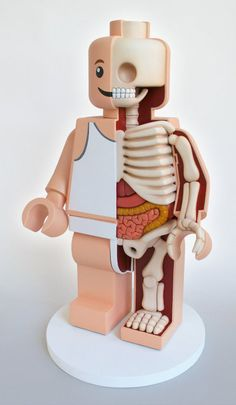 Anatomical Toys By Jason Freeny http://avaxnews.net/funny/anatomical_toys_by_jason_freeny.html