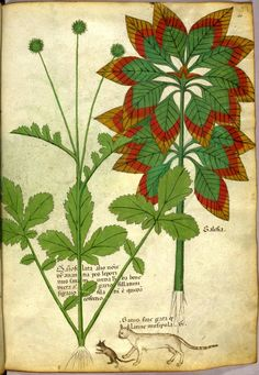 Emmanuel Chaussade: Tractatus de Herbis