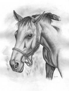 Supreme Portrait Drawing with Charcoal Ideas. Prodigious Portrait Drawing with Charcoal Ideas. Landscape Pencil Drawings, Pencil Drawings Of Flowers, Landscape Sketch, Pencil Drawing Tutorials, Drawing Ideas, Drawing Tips, Easy Animal Drawings, Horse Drawings, Animal Sketches