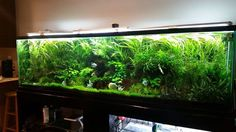 Jungle val. Woah that's perfect!!! I want my tank to look like that!