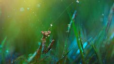 ファンタジーで異世界のような雰囲気を醸し出す、美麗な昆虫のマクロ写真 : ギズモード・ジャパン