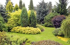 Evergreen trees are an important part of the garden, providing year round color and elegance. There are a number of different types of evergreen trees. Large Backyard Landscaping, Backyard Garden Landscape, Landscaping Images, Garden Shrubs, Garden Landscape Design, Garden Trees, Balcony Gardening, Tropical Landscaping, Types Of Evergreen Trees