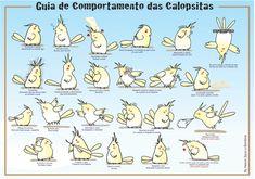 GUIA DE SAUDE - DICAS :: Amo Calopsitas Mansas