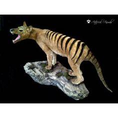 Thylacinus. Paleoarte. Animal artificial Animals, Extinct Animals, Museums, Animales, Animaux, Animal Memes, Animal, Animais, Dieren