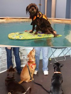Hire Sit Stay Swim with positive dog training reviews. This canine facility offers drop-off play-and-train programs, puppy socialization, obedience classes, offsite behavioral adjustment training and more.