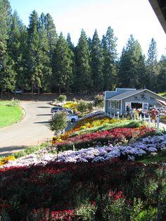 "Sierra Foothills - ""Apple Hill"""