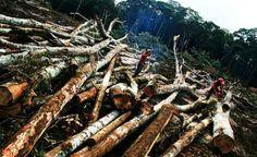 Em 40 anos, Amazônia perdeu o equivalente a três estados de São Paulo