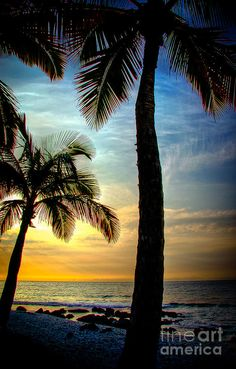 ✮ Kona Sunset  -Even though palm trees (on the beach) are so cliche, I still think their beautiful. There's something about them that makes me so happy!
