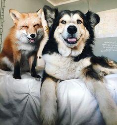 キツネと犬が仲良し01