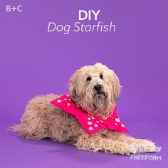 Ready to go under the sea? Transform your pup into a starfish for Halloween with this costume DIY!