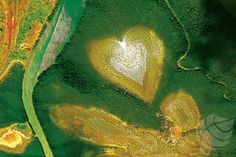 Coeur de Voh Nouvelle Calédonie