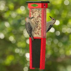 http://www.duncraft.com/Woodpecker-Suet-Shield-Feeder