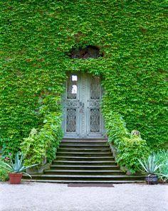 Ivy Front Door