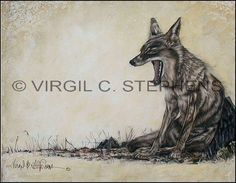 Bonking, wildlife coyote yawning giclee print from original oil painting by western artist Virgil C. Stephens