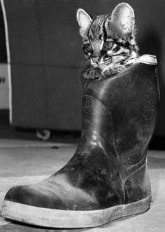 Baby Ocelot in Wellington Boot