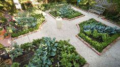 Inner-city vegie garden