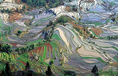 Colored fields of Yunnan, China.