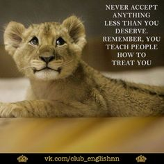 Positive Quotes For Life, Motivational Quotes For Life, Inspirational Quotes, Random Quotes, Quotes Motivation, Lioness And Cubs, African Quotes, Color Quiz, Lion Quotes