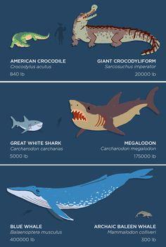 Prehistoric Megafauna VS Modern Animals - Relatively Interesting Prehistoric Wildlife, Prehistoric World, Prehistoric Creatures, Mythical Creatures, Sea Creatures, Baleen Whales, Giant Animals, Jurassic Park World, Extinct Animals