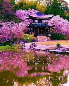 Kanshuji Temple with Sakura, Kyoto Kyoto, Kansai, …- # Kansai … - Do Garden Japanese Garden Design, Japanese Landscape, Japanese Architecture, Japanese Nature, Garden Architecture, Japanese Gardens, Sakura Cherry Blossom, Cherry Blossom Flowers, Japanese Cherry Blossoms