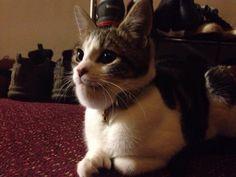 A friend's cat got stung on the chin - Imgur