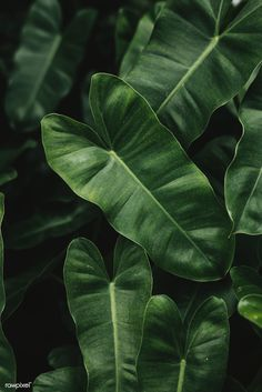 Discover recipes, home ideas, style inspiration and other ideas to try. Tropical Background, Plant Background, Greenery Background, Plant Aesthetic, Nature Aesthetic, Plant Wallpaper, Green Wallpaper, Tropical Leaves, Tropical Plants