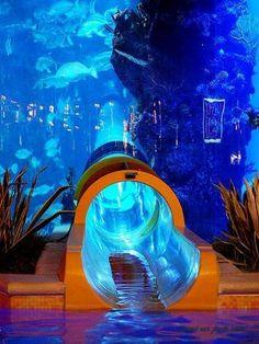 Salut tout le monde ! Dans la plupart des cas, un aquarium se résume à un petit bocal posé sur un meuble, contenant 1 ou 2 poissons. Mais pas dans les...