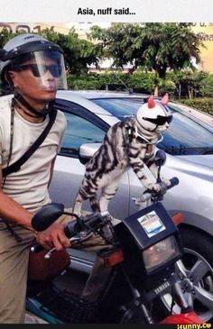 funny cat on bike | #funny #animals #cat #bike #lol #asia #head #like afunnybunny.com