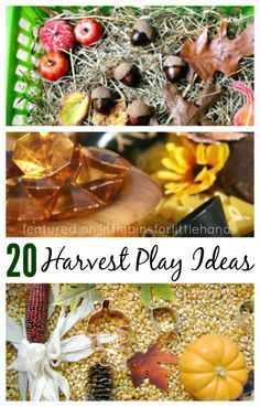 Fall Harvest Sensory Play Activities. Fall and Harvest sensory bins with corn, doughs, goop, and nature items. Preschool harvest theme ideas.