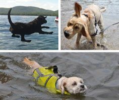 1. Go For A Swim :  Photos, clockwise from top left: submitted by Kerry Kelemen Roche; Emma, submitted by Moira Mach; submitted by Brian McGarvey