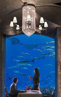 Atlantis, the Palm - Resort on the Palm Jumeirah Dubai Restaurant Hotel, Underwater Restaurant, Abu Dhabi, Cristo Corcovado, Voyage Dubai, Dubai Beach, Palms Hotel, Palm Resort, Palm Jumeirah