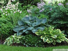 Hosta Garden Ideas Hostas in containers with white impatiens dispersed throughout 21 ideas for beautiful garden design and yard landscaping with hostas workwithnaturefo