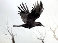 flying raven sketch - Google Search