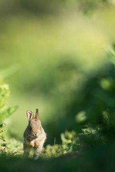 rabbit on the run