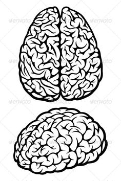 more brain clipart media clerk in 2019 brain drawing brain Structure of Rat Brain brain angle and top view